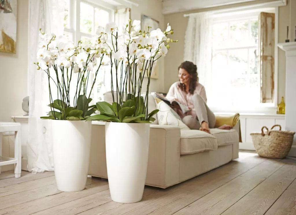 Неживые цветы в доме